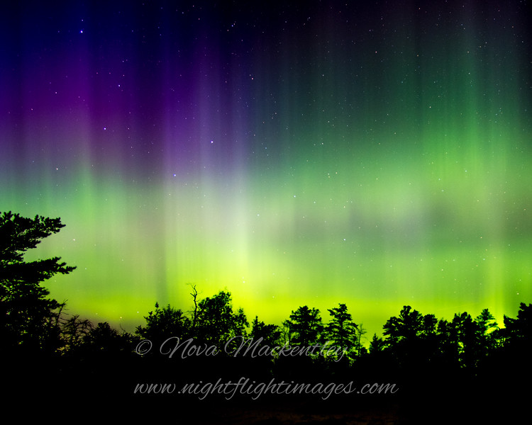 "Northern Lights © 2016 Nova Mackentley Whitefish Point, MI NLB1  <div class=""ss-paypal-button""><div class=""ss-paypal-add-to-cart-section""><div class=""ss-paypal-product-options""><h4>Mat Sizes</h4><ul><li><a href=""https://www.paypal.com/cgi-bin/webscr?cmd=_cart&business=T77V5VKCW4K2U&lc=US&item_name=Northern%20Lights%20%C2%A9%202016%20Nova%20Mackentley%20Whitefish%20Point%2C%20MI%20NLB1&item_number=http%3A%2F%2Fwww.nightflightimages.com%2FGalleries-1%2FNew%2Fi-ZRxZWwj&button_subtype=products&no_note=0&cn=Add%20special%20instructions%20to%20the%20seller%3A&no_shipping=2&currency_code=USD&weight_unit=lbs&add=1&bn=PP-ShopCartBF%3Abtn_cart_SM.gif%3ANonHosted&on0=Mat%20Sizes&option_select0=5%20x%207&option_amount0=12.00&option_select1=8%20x%2010&option_amount1=19.00&option_select2=11%20x%2014&option_amount2=29.00&option_select3=card&option_amount3=5.00&option_index=0&charset=utf-8&submit=&os0=5%20x%207"" target=""paypal""><span>5 x 7 $12.00 USD</span><img src=""https://www.paypalobjects.com/en_US/i/btn/btn_cart_SM.gif""></a></li><li><a href=""https://www.paypal.com/cgi-bin/webscr?cmd=_cart&business=T77V5VKCW4K2U&lc=US&item_name=Northern%20Lights%20%C2%A9%202016%20Nova%20Mackentley%20Whitefish%20Point%2C%20MI%20NLB1&item_number=http%3A%2F%2Fwww.nightflightimages.com%2FGalleries-1%2FNew%2Fi-ZRxZWwj&button_subtype=products&no_note=0&cn=Add%20special%20instructions%20to%20the%20seller%3A&no_shipping=2&currency_code=USD&weight_unit=lbs&add=1&bn=PP-ShopCartBF%3Abtn_cart_SM.gif%3ANonHosted&on0=Mat%20Sizes&option_select0=5%20x%207&option_amount0=12.00&option_select1=8%20x%2010&option_amount1=19.00&option_select2=11%20x%2014&option_amount2=29.00&option_select3=card&option_amount3=5.00&option_index=0&charset=utf-8&submit=&os0=8%20x%2010"" target=""paypal""><span>8 x 10 $19.00 USD</span><img src=""https://www.paypalobjects.com/en_US/i/btn/btn_cart_SM.gif""></a></li><li><a href=""https://www.paypal.com/cgi-bin/webscr?cmd=_cart&business=T77V5VKCW4K2U&lc=US&item_name=Northern%20Lights%20%C2%A9%202016%20Nova%20Mackentley%20Whitefish%20Point%2C%20MI%20NLB1&item_number=http%3A%2F%2Fwww.nightflightimages.com%2FGalleries-1%2FNew%2Fi-ZRxZWwj&button_subtype=products&no_note=0&cn=Add%20special%20instructions%20to%20the%20seller%3A&no_shipping=2&currency_code=USD&weight_unit=lbs&add=1&bn=PP-ShopCartBF%3Abtn_cart_SM.gif%3ANonHosted&on0=Mat%20Sizes&option_select0=5%20x%207&option_amount0=12.00&option_select1=8%20x%2010&option_amount1=19.00&option_select2=11%20x%2014&option_amount2=29.00&option_select3=card&option_amount3=5.00&option_index=0&charset=utf-8&submit=&os0=11%20x%2014"" target=""paypal""><span>11 x 14 $29.00 USD</span><img src=""https://www.paypalobjects.com/en_US/i/btn/btn_cart_SM.gif""></a></li><li><a href=""https://www.paypal.com/cgi-bin/webscr?cmd=_cart&business=T77V5VKCW4K2U&lc=US&item_name=Northern%20Lights%20%C2%A9%202016%20Nova%20Mackentley%20Whitefish%20Point%2C%20MI%20NLB1&item_number=http%3A%2F%2Fwww.nightflightimages.com%2FGalleries-1%2FNew%2Fi-ZRxZWwj&button_subtype=products&no_note=0&cn=Add%20special%20instructions%20to%20the%20seller%3A&no_shipping=2&currency_code=USD&weight_unit=lbs&add=1&bn=PP-ShopCartBF%3Abtn_cart_SM.gif%3ANonHosted&on0=Mat%20Sizes&option_select0=5%20x%207&option_amount0=12.00&option_select1=8%20x%2010&option_amount1=19.00&option_select2=11%20x%2014&option_amount2=29.00&option_select3=card&option_amount3=5.00&option_index=0&charset=utf-8&submit=&os0=card"" target=""paypal""><span>card $5.00 USD</span><img src=""https://www.paypalobjects.com/en_US/i/btn/btn_cart_SM.gif""></a></li></ul></div></div> <div class=""ss-paypal-view-cart-section""><a href=""https://www.paypal.com/cgi-bin/webscr?cmd=_cart&business=T77V5VKCW4K2U&display=1&item_name=Northern%20Lights%20%C2%A9%202016%20Nova%20Mackentley%20Whitefish%20Point%2C%20MI%20NLB1&item_number=http%3A%2F%2Fwww.nightflightimages.com%2FGalleries-1%2FNew%2Fi-ZRxZWwj&charset=utf-8&submit="" target=""paypal"" class=""ss-paypal-submit-button""><img src=""https://www.paypalobjects.com/en_US/i/btn/btn_viewcart_LG.gif""></a></div></div><div class=""ss-paypal-button-end""></div>"
