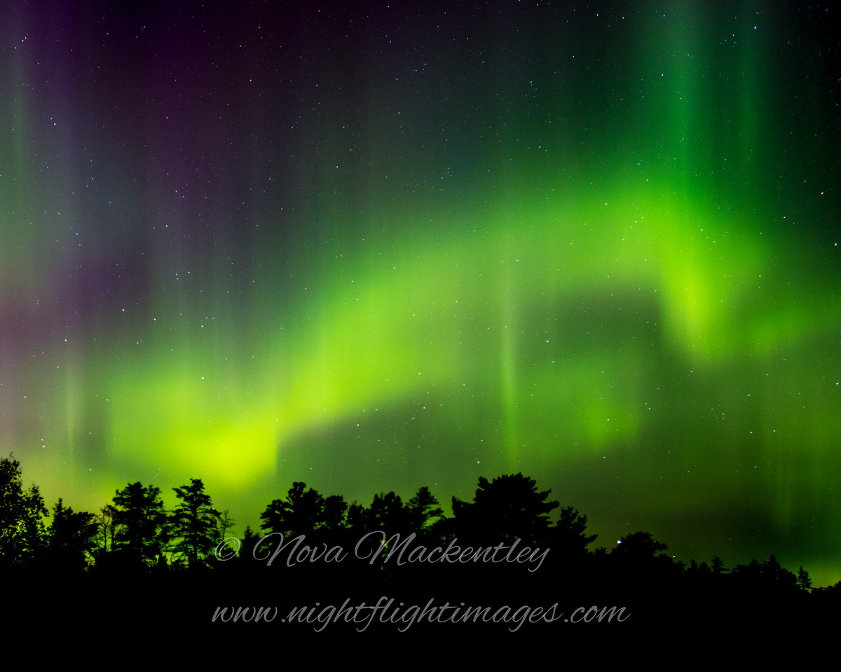 "Northern Lights © 2016 Nova Mackentley Whitefish Point, MI NLB3  <div class=""ss-paypal-button""><div class=""ss-paypal-add-to-cart-section""><div class=""ss-paypal-product-options""><h4>Mat Sizes</h4><ul><li><a href=""https://www.paypal.com/cgi-bin/webscr?cmd=_cart&business=T77V5VKCW4K2U&lc=US&item_name=Northern%20Lights%20%C2%A9%202016%20Nova%20Mackentley%20Whitefish%20Point%2C%20MI%20NLB3&item_number=http%3A%2F%2Fwww.nightflightimages.com%2FGalleries-1%2FNew%2Fi-QqLbKSG&button_subtype=products&no_note=0&cn=Add%20special%20instructions%20to%20the%20seller%3A&no_shipping=2&currency_code=USD&weight_unit=lbs&add=1&bn=PP-ShopCartBF%3Abtn_cart_SM.gif%3ANonHosted&on0=Mat%20Sizes&option_select0=5%20x%207&option_amount0=10.00&option_select1=8%20x%2010&option_amount1=18.00&option_select2=11%20x%2014&option_amount2=28.00&option_select3=card&option_amount3=4.00&option_index=0&charset=utf-8&submit=&os0=5%20x%207"" target=""paypal""><span>5 x 7 $11.00 USD</span><img src=""https://www.paypalobjects.com/en_US/i/btn/btn_cart_SM.gif""></a></li><li><a href=""https://www.paypal.com/cgi-bin/webscr?cmd=_cart&business=T77V5VKCW4K2U&lc=US&item_name=Northern%20Lights%20%C2%A9%202016%20Nova%20Mackentley%20Whitefish%20Point%2C%20MI%20NLB3&item_number=http%3A%2F%2Fwww.nightflightimages.com%2FGalleries-1%2FNew%2Fi-QqLbKSG&button_subtype=products&no_note=0&cn=Add%20special%20instructions%20to%20the%20seller%3A&no_shipping=2&currency_code=USD&weight_unit=lbs&add=1&bn=PP-ShopCartBF%3Abtn_cart_SM.gif%3ANonHosted&on0=Mat%20Sizes&option_select0=5%20x%207&option_amount0=10.00&option_select1=8%20x%2010&option_amount1=18.00&option_select2=11%20x%2014&option_amount2=28.00&option_select3=card&option_amount3=4.00&option_index=0&charset=utf-8&submit=&os0=8%20x%2010"" target=""paypal""><span>8 x 10 $19.00 USD</span><img src=""https://www.paypalobjects.com/en_US/i/btn/btn_cart_SM.gif""></a></li><li><a href=""https://www.paypal.com/cgi-bin/webscr?cmd=_cart&business=T77V5VKCW4K2U&lc=US&item_name=Northern%20Lights%20%C2%A9%202016%20Nova%20Mackentley%20Whitefish%20Point%2C%20MI%20NLB3&item_number=http%3A%2F%2Fwww.nightflightimages.com%2FGalleries-1%2FNew%2Fi-QqLbKSG&button_subtype=products&no_note=0&cn=Add%20special%20instructions%20to%20the%20seller%3A&no_shipping=2&currency_code=USD&weight_unit=lbs&add=1&bn=PP-ShopCartBF%3Abtn_cart_SM.gif%3ANonHosted&on0=Mat%20Sizes&option_select0=5%20x%207&option_amount0=10.00&option_select1=8%20x%2010&option_amount1=18.00&option_select2=11%20x%2014&option_amount2=28.00&option_select3=card&option_amount3=4.00&option_index=0&charset=utf-8&submit=&os0=11%20x%2014"" target=""paypal""><span>11 x 14 $29.00 USD</span><img src=""https://www.paypalobjects.com/en_US/i/btn/btn_cart_SM.gif""></a></li><li><a href=""https://www.paypal.com/cgi-bin/webscr?cmd=_cart&business=T77V5VKCW4K2U&lc=US&item_name=Northern%20Lights%20%C2%A9%202016%20Nova%20Mackentley%20Whitefish%20Point%2C%20MI%20NLB3&item_number=http%3A%2F%2Fwww.nightflightimages.com%2FGalleries-1%2FNew%2Fi-QqLbKSG&button_subtype=products&no_note=0&cn=Add%20special%20instructions%20to%20the%20seller%3A&no_shipping=2&currency_code=USD&weight_unit=lbs&add=1&bn=PP-ShopCartBF%3Abtn_cart_SM.gif%3ANonHosted&on0=Mat%20Sizes&option_select0=5%20x%207&option_amount0=10.00&option_select1=8%20x%2010&option_amount1=18.00&option_select2=11%20x%2014&option_amount2=28.00&option_select3=card&option_amount3=4.00&option_index=0&charset=utf-8&submit=&os0=card"" target=""paypal""><span>card $5.00 USD</span><img src=""https://www.paypalobjects.com/en_US/i/btn/btn_cart_SM.gif""></a></li></ul></div></div> <div class=""ss-paypal-view-cart-section""><a href=""https://www.paypal.com/cgi-bin/webscr?cmd=_cart&business=T77V5VKCW4K2U&display=1&item_name=Northern%20Lights%20%C2%A9%202016%20Nova%20Mackentley%20Whitefish%20Point%2C%20MI%20NLB3&item_number=http%3A%2F%2Fwww.nightflightimages.com%2FGalleries-1%2FNew%2Fi-QqLbKSG&charset=utf-8&submit="" target=""paypal"" class=""ss-paypal-submit-button""><img src=""https://www.paypalobjects.com/en_US/i/btn/btn_viewcart_LG.gif""></a></div></div><div class=""ss-paypal-button-end""></div>"