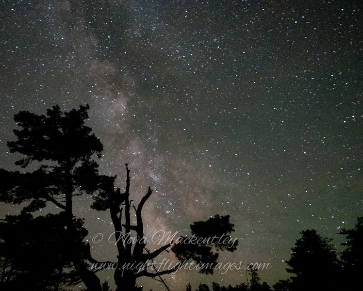 """Milky Way & Tree 1 © 2013 Nova Mackentley Whitefish Point, MI MWT  <div class=""""ss-paypal-button""""><div class=""""ss-paypal-add-to-cart-section""""><div class=""""ss-paypal-product-options""""><h4>Mat Sizes</h4><ul><li><a href=""""https://www.paypal.com/cgi-bin/webscr?cmd=_cart&business=T77V5VKCW4K2U&lc=US&item_name=Milky%20Way%20%26amp%3B%20Tree%201%20%C2%A9%202013%20Nova%20Mackentley%20Whitefish%20Point%2C%20MI%20MWT&item_number=http%3A%2F%2Fwww.nightflightimages.com%2FGalleries-1%2FUpper-Peninsula-of-MI%2Fi-SCt6Tvg&button_subtype=products&no_note=0&cn=Add%20special%20instructions%20to%20the%20seller%3A&no_shipping=2&currency_code=USD&weight_unit=lbs&add=1&bn=PP-ShopCartBF%3Abtn_cart_SM.gif%3ANonHosted&on0=Mat%20Sizes&option_select0=5%20x%207&option_amount0=10.00&option_select1=8%20x%2010&option_amount1=18.00&option_select2=11%20x%2014&option_amount2=28.00&option_select3=card&option_amount3=4.00&option_index=0&charset=utf-8&submit=&os0=5%20x%207"""" target=""""paypal""""><span>5 x 7 $11.00 USD</span><img src=""""https://www.paypalobjects.com/en_US/i/btn/btn_cart_SM.gif""""></a></li><li><a href=""""https://www.paypal.com/cgi-bin/webscr?cmd=_cart&business=T77V5VKCW4K2U&lc=US&item_name=Milky%20Way%20%26amp%3B%20Tree%201%20%C2%A9%202013%20Nova%20Mackentley%20Whitefish%20Point%2C%20MI%20MWT&item_number=http%3A%2F%2Fwww.nightflightimages.com%2FGalleries-1%2FUpper-Peninsula-of-MI%2Fi-SCt6Tvg&button_subtype=products&no_note=0&cn=Add%20special%20instructions%20to%20the%20seller%3A&no_shipping=2&currency_code=USD&weight_unit=lbs&add=1&bn=PP-ShopCartBF%3Abtn_cart_SM.gif%3ANonHosted&on0=Mat%20Sizes&option_select0=5%20x%207&option_amount0=10.00&option_select1=8%20x%2010&option_amount1=18.00&option_select2=11%20x%2014&option_amount2=28.00&option_select3=card&option_amount3=4.00&option_index=0&charset=utf-8&submit=&os0=8%20x%2010"""" target=""""paypal""""><span>8 x 10 $19.00 USD</span><img src=""""https://www.paypalobjects.com/en_US/i/btn/btn_cart_SM.gif""""></a></li><li><a href=""""https://www.paypal.com/cgi-bin/webscr?cmd=_cart&"""