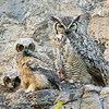 "Great Horned Owl family © 2016 Nova Mackentley Estes Park, CO GH3  <div class=""ss-paypal-button""><div class=""ss-paypal-add-to-cart-section""><div class=""ss-paypal-product-options""><h4>Mat Sizes</h4><ul><li><a href=""https://www.paypal.com/cgi-bin/webscr?cmd=_cart&amp;business=T77V5VKCW4K2U&amp;lc=US&amp;item_name=Great%20Horned%20Owl%20family%20%C2%A9%202016%20Nova%20Mackentley%20Estes%20Park%2C%20CO%20GH3&amp;item_number=http%3A%2F%2Fwww.nightflightimages.com%2FGalleries-1%2FNew%2Fi-FpqxgMt&amp;button_subtype=products&amp;no_note=0&amp;cn=Add%20special%20instructions%20to%20the%20seller%3A&amp;no_shipping=2&amp;currency_code=USD&amp;weight_unit=lbs&amp;add=1&amp;bn=PP-ShopCartBF%3Abtn_cart_SM.gif%3ANonHosted&amp;on0=Mat%20Sizes&amp;option_select0=5%20x%207&amp;option_amount0=10.00&amp;option_select1=8%20x%2010&amp;option_amount1=18.00&amp;option_select2=11%20x%2014&amp;option_amount2=28.00&amp;option_select3=card&amp;option_amount3=4.00&amp;option_index=0&amp;charset=utf-8&amp;submit=&amp;os0=5%20x%207"" target=""paypal""><span>5 x 7 $11.00 USD</span><img src=""https://www.paypalobjects.com/en_US/i/btn/btn_cart_SM.gif""></a></li><li><a href=""https://www.paypal.com/cgi-bin/webscr?cmd=_cart&amp;business=T77V5VKCW4K2U&amp;lc=US&amp;item_name=Great%20Horned%20Owl%20family%20%C2%A9%202016%20Nova%20Mackentley%20Estes%20Park%2C%20CO%20GH3&amp;item_number=http%3A%2F%2Fwww.nightflightimages.com%2FGalleries-1%2FNew%2Fi-FpqxgMt&amp;button_subtype=products&amp;no_note=0&amp;cn=Add%20special%20instructions%20to%20the%20seller%3A&amp;no_shipping=2&amp;currency_code=USD&amp;weight_unit=lbs&amp;add=1&amp;bn=PP-ShopCartBF%3Abtn_cart_SM.gif%3ANonHosted&amp;on0=Mat%20Sizes&amp;option_select0=5%20x%207&amp;option_amount0=10.00&amp;option_select1=8%20x%2010&amp;option_amount1=18.00&amp;option_select2=11%20x%2014&amp;option_amount2=28.00&amp;option_select3=card&amp;option_amount3=4.00&amp;option_index=0&amp;charset=utf-8&amp;submit=&amp;os0=8%20x%2010"" target=""paypal""><span>8 x 10 $19.00 USD</span><img src=""https://www.paypalobjects.com/en_US/i/btn/btn_cart_SM.gif""></a></li><li><a href=""https://www.paypal.com/cgi-bin/webscr?cmd=_cart&amp;business=T77V5VKCW4K2U&amp;lc=US&amp;item_name=Great%20Horned%20Owl%20family%20%C2%A9%202016%20Nova%20Mackentley%20Estes%20Park%2C%20CO%20GH3&amp;item_number=http%3A%2F%2Fwww.nightflightimages.com%2FGalleries-1%2FNew%2Fi-FpqxgMt&amp;button_subtype=products&amp;no_note=0&amp;cn=Add%20special%20instructions%20to%20the%20seller%3A&amp;no_shipping=2&amp;currency_code=USD&amp;weight_unit=lbs&amp;add=1&amp;bn=PP-ShopCartBF%3Abtn_cart_SM.gif%3ANonHosted&amp;on0=Mat%20Sizes&amp;option_select0=5%20x%207&amp;option_amount0=10.00&amp;option_select1=8%20x%2010&amp;option_amount1=18.00&amp;option_select2=11%20x%2014&amp;option_amount2=28.00&amp;option_select3=card&amp;option_amount3=4.00&amp;option_index=0&amp;charset=utf-8&amp;submit=&amp;os0=11%20x%2014"" target=""paypal""><span>11 x 14 $29.00 USD</span><img src=""https://www.paypalobjects.com/en_US/i/btn/btn_cart_SM.gif""></a></li><li><a href=""https://www.paypal.com/cgi-bin/webscr?cmd=_cart&amp;business=T77V5VKCW4K2U&amp;lc=US&amp;item_name=Great%20Horned%20Owl%20family%20%C2%A9%202016%20Nova%20Mackentley%20Estes%20Park%2C%20CO%20GH3&amp;item_number=http%3A%2F%2Fwww.nightflightimages.com%2FGalleries-1%2FNew%2Fi-FpqxgMt&amp;button_subtype=products&amp;no_note=0&amp;cn=Add%20special%20instructions%20to%20the%20seller%3A&amp;no_shipping=2&amp;currency_code=USD&amp;weight_unit=lbs&amp;add=1&amp;bn=PP-ShopCartBF%3Abtn_cart_SM.gif%3ANonHosted&amp;on0=Mat%20Sizes&amp;option_select0=5%20x%207&amp;option_amount0=10.00&amp;option_select1=8%20x%2010&amp;option_amount1=18.00&amp;option_select2=11%20x%2014&amp;option_amount2=28.00&amp;option_select3=card&amp;option_amount3=4.00&amp;option_index=0&amp;charset=utf-8&amp;submit=&amp;os0=card"" target=""paypal""><span>card $5.00 USD</span><img src=""https://www.paypalobjects.com/en_US/i/btn/btn_cart_SM.gif""></a></li></ul></div></div> <div class=""ss-paypal-view-cart-section""><a href=""https://www.paypal.com/cgi-bin/webscr?cmd=_cart&amp;business=T77V5VKCW4K2U&amp;display=1&amp;item_name=Great%20Horned%20Owl%20family%20%C2%A9%202016%20Nova%20Mackentley%20Estes%20Park%2C%20CO%20GH3&amp;item_number=http%3A%2F%2Fwww.nightflightimages.com%2FGalleries-1%2FNew%2Fi-FpqxgMt&amp;charset=utf-8&amp;submit="" target=""paypal"" class=""ss-paypal-submit-button""><img src=""https://www.paypalobjects.com/en_US/i/btn/btn_viewcart_LG.gif""></a></div></div><div class=""ss-paypal-button-end""></div>"