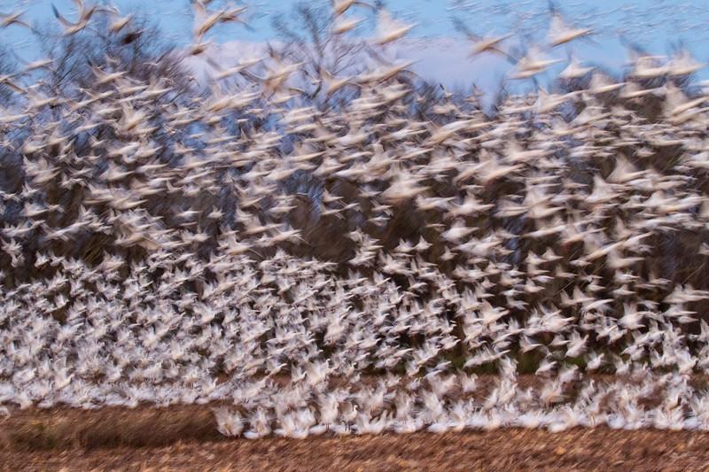 2016 Pocosin Lakes National Wildlife Refuge, North Carolina