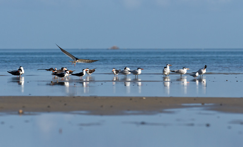 2015 Pea Island National Wildlife Refuge, Hatteras, North Carolina