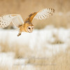 "Barn Owl hunting © 2017 Nova Mackentley Northern UT BNS  <div class=""ss-paypal-button""><div class=""ss-paypal-add-to-cart-section""><div class=""ss-paypal-product-options""><h4>Mat Sizes</h4><ul><li><a href=""https://www.paypal.com/cgi-bin/webscr?cmd=_cart&business=T77V5VKCW4K2U&lc=US&item_name=Barn%20Owl%20hunting%20%C2%A9%202017%20Nova%20Mackentley%20Northern%20UT%20BNS&item_number=http%3A%2F%2Fwww.nightflightimages.com%2FGalleries-1%2FNew%2Fi-8vCDmTc&button_subtype=products&no_note=0&cn=Add%20special%20instructions%20to%20the%20seller%3A&no_shipping=2&currency_code=USD&weight_unit=lbs&add=1&bn=PP-ShopCartBF%3Abtn_cart_SM.gif%3ANonHosted&on0=Mat%20Sizes&option_select0=5%20x%207&option_amount0=10.00&option_select1=8%20x%2010&option_amount1=18.00&option_select2=11%20x%2014&option_amount2=28.00&option_select3=card&option_amount3=4.00&option_index=0&charset=utf-8&submit=&os0=5%20x%207"" target=""paypal""><span>5 x 7 $11.00 USD</span><img src=""https://www.paypalobjects.com/en_US/i/btn/btn_cart_SM.gif""></a></li><li><a href=""https://www.paypal.com/cgi-bin/webscr?cmd=_cart&business=T77V5VKCW4K2U&lc=US&item_name=Barn%20Owl%20hunting%20%C2%A9%202017%20Nova%20Mackentley%20Northern%20UT%20BNS&item_number=http%3A%2F%2Fwww.nightflightimages.com%2FGalleries-1%2FNew%2Fi-8vCDmTc&button_subtype=products&no_note=0&cn=Add%20special%20instructions%20to%20the%20seller%3A&no_shipping=2&currency_code=USD&weight_unit=lbs&add=1&bn=PP-ShopCartBF%3Abtn_cart_SM.gif%3ANonHosted&on0=Mat%20Sizes&option_select0=5%20x%207&option_amount0=10.00&option_select1=8%20x%2010&option_amount1=18.00&option_select2=11%20x%2014&option_amount2=28.00&option_select3=card&option_amount3=4.00&option_index=0&charset=utf-8&submit=&os0=8%20x%2010"" target=""paypal""><span>8 x 10 $19.00 USD</span><img src=""https://www.paypalobjects.com/en_US/i/btn/btn_cart_SM.gif""></a></li><li><a href=""https://www.paypal.com/cgi-bin/webscr?cmd=_cart&business=T77V5VKCW4K2U&lc=US&item_name=Barn%20Owl%20hunting%20%C2%A9%202017%20Nova%20Mackentley%20Northern%20UT%20BNS&item_number=http%3A%2F%2Fwww.nightflightimages.com%2FGalleries-1%2FNew%2Fi-8vCDmTc&button_subtype=products&no_note=0&cn=Add%20special%20instructions%20to%20the%20seller%3A&no_shipping=2&currency_code=USD&weight_unit=lbs&add=1&bn=PP-ShopCartBF%3Abtn_cart_SM.gif%3ANonHosted&on0=Mat%20Sizes&option_select0=5%20x%207&option_amount0=10.00&option_select1=8%20x%2010&option_amount1=18.00&option_select2=11%20x%2014&option_amount2=28.00&option_select3=card&option_amount3=4.00&option_index=0&charset=utf-8&submit=&os0=11%20x%2014"" target=""paypal""><span>11 x 14 $29.00 USD</span><img src=""https://www.paypalobjects.com/en_US/i/btn/btn_cart_SM.gif""></a></li><li><a href=""https://www.paypal.com/cgi-bin/webscr?cmd=_cart&business=T77V5VKCW4K2U&lc=US&item_name=Barn%20Owl%20hunting%20%C2%A9%202017%20Nova%20Mackentley%20Northern%20UT%20BNS&item_number=http%3A%2F%2Fwww.nightflightimages.com%2FGalleries-1%2FNew%2Fi-8vCDmTc&button_subtype=products&no_note=0&cn=Add%20special%20instructions%20to%20the%20seller%3A&no_shipping=2&currency_code=USD&weight_unit=lbs&add=1&bn=PP-ShopCartBF%3Abtn_cart_SM.gif%3ANonHosted&on0=Mat%20Sizes&option_select0=5%20x%207&option_amount0=10.00&option_select1=8%20x%2010&option_amount1=18.00&option_select2=11%20x%2014&option_amount2=28.00&option_select3=card&option_amount3=4.00&option_index=0&charset=utf-8&submit=&os0=card"" target=""paypal""><span>card $5.00 USD</span><img src=""https://www.paypalobjects.com/en_US/i/btn/btn_cart_SM.gif""></a></li></ul></div></div> <div class=""ss-paypal-view-cart-section""><a href=""https://www.paypal.com/cgi-bin/webscr?cmd=_cart&business=T77V5VKCW4K2U&display=1&item_name=Barn%20Owl%20hunting%20%C2%A9%202017%20Nova%20Mackentley%20Northern%20UT%20BNS&item_number=http%3A%2F%2Fwww.nightflightimages.com%2FGalleries-1%2FNew%2Fi-8vCDmTc&charset=utf-8&submit="" target=""paypal"" class=""ss-paypal-submit-button""><img src=""https://www.paypalobjects.com/en_US/i/btn/btn_viewcart_LG.gif""></a></div></div><div class=""ss-paypal-button-end""></div>"
