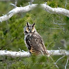 "Long-eared Owl  © 2008 C. M. Neri Whitefish Point, MI LEOWWP  <div class=""ss-paypal-button""><div class=""ss-paypal-add-to-cart-section""><div class=""ss-paypal-product-options""><h4>Mat Sizes</h4><ul><li><a href=""https://www.paypal.com/cgi-bin/webscr?cmd=_cart&amp;business=T77V5VKCW4K2U&amp;lc=US&amp;item_name=Long-eared%20Owl%20%20%C2%A9%202008%20C.%20M.%20Neri%20Whitefish%20Point%2C%20MI%20LEOWWP&amp;item_number=http%3A%2F%2Fwww.nightflightimages.com%2FGalleries-1%2FOwls%2Fi-Ph6ZFFb&amp;button_subtype=products&amp;no_note=0&amp;cn=Add%20special%20instructions%20to%20the%20seller%3A&amp;no_shipping=2&amp;currency_code=USD&amp;weight_unit=lbs&amp;add=1&amp;bn=PP-ShopCartBF%3Abtn_cart_SM.gif%3ANonHosted&amp;on0=Mat%20Sizes&amp;option_select0=5%20x%207&amp;option_amount0=10.00&amp;option_select1=8%20x%2010&amp;option_amount1=18.00&amp;option_select2=11%20x%2014&amp;option_amount2=28.00&amp;option_select3=card&amp;option_amount3=4.00&amp;option_index=0&amp;charset=utf-8&amp;submit=&amp;os0=5%20x%207"" target=""paypal""><span>5 x 7 $11.00 USD</span><img src=""https://www.paypalobjects.com/en_US/i/btn/btn_cart_SM.gif""></a></li><li><a href=""https://www.paypal.com/cgi-bin/webscr?cmd=_cart&amp;business=T77V5VKCW4K2U&amp;lc=US&amp;item_name=Long-eared%20Owl%20%20%C2%A9%202008%20C.%20M.%20Neri%20Whitefish%20Point%2C%20MI%20LEOWWP&amp;item_number=http%3A%2F%2Fwww.nightflightimages.com%2FGalleries-1%2FOwls%2Fi-Ph6ZFFb&amp;button_subtype=products&amp;no_note=0&amp;cn=Add%20special%20instructions%20to%20the%20seller%3A&amp;no_shipping=2&amp;currency_code=USD&amp;weight_unit=lbs&amp;add=1&amp;bn=PP-ShopCartBF%3Abtn_cart_SM.gif%3ANonHosted&amp;on0=Mat%20Sizes&amp;option_select0=5%20x%207&amp;option_amount0=10.00&amp;option_select1=8%20x%2010&amp;option_amount1=18.00&amp;option_select2=11%20x%2014&amp;option_amount2=28.00&amp;option_select3=card&amp;option_amount3=4.00&amp;option_index=0&amp;charset=utf-8&amp;submit=&amp;os0=8%20x%2010"" target=""paypal""><span>8 x 10 $19.00 USD</span><img src=""https://www.paypalobjects.com/en_US/i/btn/btn_cart_SM.gif""></a></li><li><a href=""https://www.paypal.com/cgi-bin/webscr?cmd=_cart&amp;business=T77V5VKCW4K2U&amp;lc=US&amp;item_name=Long-eared%20Owl%20%20%C2%A9%202008%20C.%20M.%20Neri%20Whitefish%20Point%2C%20MI%20LEOWWP&amp;item_number=http%3A%2F%2Fwww.nightflightimages.com%2FGalleries-1%2FOwls%2Fi-Ph6ZFFb&amp;button_subtype=products&amp;no_note=0&amp;cn=Add%20special%20instructions%20to%20the%20seller%3A&amp;no_shipping=2&amp;currency_code=USD&amp;weight_unit=lbs&amp;add=1&amp;bn=PP-ShopCartBF%3Abtn_cart_SM.gif%3ANonHosted&amp;on0=Mat%20Sizes&amp;option_select0=5%20x%207&amp;option_amount0=10.00&amp;option_select1=8%20x%2010&amp;option_amount1=18.00&amp;option_select2=11%20x%2014&amp;option_amount2=28.00&amp;option_select3=card&amp;option_amount3=4.00&amp;option_index=0&amp;charset=utf-8&amp;submit=&amp;os0=11%20x%2014"" target=""paypal""><span>11 x 14 $29.00 USD</span><img src=""https://www.paypalobjects.com/en_US/i/btn/btn_cart_SM.gif""></a></li><li><a href=""https://www.paypal.com/cgi-bin/webscr?cmd=_cart&amp;business=T77V5VKCW4K2U&amp;lc=US&amp;item_name=Long-eared%20Owl%20%20%C2%A9%202008%20C.%20M.%20Neri%20Whitefish%20Point%2C%20MI%20LEOWWP&amp;item_number=http%3A%2F%2Fwww.nightflightimages.com%2FGalleries-1%2FOwls%2Fi-Ph6ZFFb&amp;button_subtype=products&amp;no_note=0&amp;cn=Add%20special%20instructions%20to%20the%20seller%3A&amp;no_shipping=2&amp;currency_code=USD&amp;weight_unit=lbs&amp;add=1&amp;bn=PP-ShopCartBF%3Abtn_cart_SM.gif%3ANonHosted&amp;on0=Mat%20Sizes&amp;option_select0=5%20x%207&amp;option_amount0=10.00&amp;option_select1=8%20x%2010&amp;option_amount1=18.00&amp;option_select2=11%20x%2014&amp;option_amount2=28.00&amp;option_select3=card&amp;option_amount3=4.00&amp;option_index=0&amp;charset=utf-8&amp;submit=&amp;os0=card"" target=""paypal""><span>card $5.00 USD</span><img src=""https://www.paypalobjects.com/en_US/i/btn/btn_cart_SM.gif""></a></li></ul></div></div> <div class=""ss-paypal-view-cart-section""><a href=""https://www.paypal.com/cgi-bin/webscr?cmd=_cart&amp;business=T77V5VKCW4K2U&amp;display=1&amp;item_name=Long-eared%20Owl%20%20%C2%A9%202008%20C.%20M.%20Neri%20Whitefish%20Point%2C%20MI%20LEOWWP&amp;item_number=http%3A%2F%2Fwww.nightflightimages.com%2FGalleries-1%2FOwls%2Fi-Ph6ZFFb&amp;charset=utf-8&amp;submit="" target=""paypal"" class=""ss-paypal-submit-button""><img src=""https://www.paypalobjects.com/en_US/i/btn/btn_viewcart_LG.gif""></a></div></div><div class=""ss-paypal-button-end""></div>"