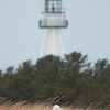 "Snowy Owl with lighthouse © 2013 C. M. Neri Whitefish Point, MI  SNOWLTB <div class=""ss-paypal-button""><div class=""ss-paypal-add-to-cart-section""><div class=""ss-paypal-product-options""><h4>Mat Sizes</h4><ul><li><a href=""https://www.paypal.com/cgi-bin/webscr?cmd=_cart&business=T77V5VKCW4K2U&lc=US&item_name=Snowy%20Owl%20with%20lighthouse%20%C2%A9%202013%20C.%20M.%20Neri%20Whitefish%20Point%2C%20MI%20%20SNOWLTB&item_number=http%3A%2F%2Fwww.nightflightimages.com%2FGalleries-1%2FOwls%2Fi-TJ5GB65&button_subtype=products&no_note=0&cn=Add%20special%20instructions%20to%20the%20seller%3A&no_shipping=2&currency_code=USD&weight_unit=lbs&add=1&bn=PP-ShopCartBF%3Abtn_cart_SM.gif%3ANonHosted&on0=Mat%20Sizes&option_select0=5%20x%207&option_amount0=10.00&option_select1=8%20x%2010&option_amount1=18.00&option_select2=11%20x%2014&option_amount2=28.00&option_select3=card&option_amount3=4.00&option_index=0&charset=utf-8&submit=&os0=5%20x%207"" target=""paypal""><span>5 x 7 $11.00 USD</span><img src=""https://www.paypalobjects.com/en_US/i/btn/btn_cart_SM.gif""></a></li><li><a href=""https://www.paypal.com/cgi-bin/webscr?cmd=_cart&business=T77V5VKCW4K2U&lc=US&item_name=Snowy%20Owl%20with%20lighthouse%20%C2%A9%202013%20C.%20M.%20Neri%20Whitefish%20Point%2C%20MI%20%20SNOWLTB&item_number=http%3A%2F%2Fwww.nightflightimages.com%2FGalleries-1%2FOwls%2Fi-TJ5GB65&button_subtype=products&no_note=0&cn=Add%20special%20instructions%20to%20the%20seller%3A&no_shipping=2&currency_code=USD&weight_unit=lbs&add=1&bn=PP-ShopCartBF%3Abtn_cart_SM.gif%3ANonHosted&on0=Mat%20Sizes&option_select0=5%20x%207&option_amount0=10.00&option_select1=8%20x%2010&option_amount1=18.00&option_select2=11%20x%2014&option_amount2=28.00&option_select3=card&option_amount3=4.00&option_index=0&charset=utf-8&submit=&os0=8%20x%2010"" target=""paypal""><span>8 x 10 $19.00 USD</span><img src=""https://www.paypalobjects.com/en_US/i/btn/btn_cart_SM.gif""></a></li><li><a href=""https://www.paypal.com/cgi-bin/webscr?cmd=_cart&business=T77V5VKCW4K2U&lc=US&item_name=Snowy%20Owl%20with%20lighthouse%20%C2%A9%202013%20C.%20M.%20Neri%20Whitefish%20Point%2C%20MI%20%20SNOWLTB&item_number=http%3A%2F%2Fwww.nightflightimages.com%2FGalleries-1%2FOwls%2Fi-TJ5GB65&button_subtype=products&no_note=0&cn=Add%20special%20instructions%20to%20the%20seller%3A&no_shipping=2&currency_code=USD&weight_unit=lbs&add=1&bn=PP-ShopCartBF%3Abtn_cart_SM.gif%3ANonHosted&on0=Mat%20Sizes&option_select0=5%20x%207&option_amount0=10.00&option_select1=8%20x%2010&option_amount1=18.00&option_select2=11%20x%2014&option_amount2=28.00&option_select3=card&option_amount3=4.00&option_index=0&charset=utf-8&submit=&os0=11%20x%2014"" target=""paypal""><span>11 x 14 $29.00 USD</span><img src=""https://www.paypalobjects.com/en_US/i/btn/btn_cart_SM.gif""></a></li><li><a href=""https://www.paypal.com/cgi-bin/webscr?cmd=_cart&business=T77V5VKCW4K2U&lc=US&item_name=Snowy%20Owl%20with%20lighthouse%20%C2%A9%202013%20C.%20M.%20Neri%20Whitefish%20Point%2C%20MI%20%20SNOWLTB&item_number=http%3A%2F%2Fwww.nightflightimages.com%2FGalleries-1%2FOwls%2Fi-TJ5GB65&button_subtype=products&no_note=0&cn=Add%20special%20instructions%20to%20the%20seller%3A&no_shipping=2&currency_code=USD&weight_unit=lbs&add=1&bn=PP-ShopCartBF%3Abtn_cart_SM.gif%3ANonHosted&on0=Mat%20Sizes&option_select0=5%20x%207&option_amount0=10.00&option_select1=8%20x%2010&option_amount1=18.00&option_select2=11%20x%2014&option_amount2=28.00&option_select3=card&option_amount3=4.00&option_index=0&charset=utf-8&submit=&os0=card"" target=""paypal""><span>card $5.00 USD</span><img src=""https://www.paypalobjects.com/en_US/i/btn/btn_cart_SM.gif""></a></li></ul></div></div> <div class=""ss-paypal-view-cart-section""><a href=""https://www.paypal.com/cgi-bin/webscr?cmd=_cart&business=T77V5VKCW4K2U&display=1&item_name=Snowy%20Owl%20with%20lighthouse%20%C2%A9%202013%20C.%20M.%20Neri%20Whitefish%20Point%2C%20MI%20%20SNOWLTB&item_number=http%3A%2F%2Fwww.nightflightimages.com%2FGalleries-1%2FOwls%2Fi-TJ5GB65&charset=utf-8&submit="" target=""paypal"" class=""ss-paypal-submit-button""><img src=""https://www.paypalobjects.com/en_US/i/btn/btn_viewcart_LG.gif""></a></div></div><div class=""ss-paypal-button-end""></div>"