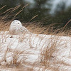 "Snowy Owl in the dune grass © 2013 C. M. Neri, Whitefish Point ,MI  SNOWDUGR <div class=""ss-paypal-button""><div class=""ss-paypal-add-to-cart-section""><div class=""ss-paypal-product-options""><h4>Mat Sizes</h4><ul><li><a href=""https://www.paypal.com/cgi-bin/webscr?cmd=_cart&business=T77V5VKCW4K2U&lc=US&item_name=Snowy%20Owl%20in%20the%20dune%20grass%20%C2%A9%202013%20C.%20M.%20Neri%2C%20Whitefish%20Point%20%2CMI%20%20SNOWDUGR&item_number=http%3A%2F%2Fwww.nightflightimages.com%2FGalleries-1%2FOwls%2Fi-Zr4LtTP&button_subtype=products&no_note=0&cn=Add%20special%20instructions%20to%20the%20seller%3A&no_shipping=2&currency_code=USD&weight_unit=lbs&add=1&bn=PP-ShopCartBF%3Abtn_cart_SM.gif%3ANonHosted&on0=Mat%20Sizes&option_select0=5%20x%207&option_amount0=10.00&option_select1=8%20x%2010&option_amount1=18.00&option_select2=11%20x%2014&option_amount2=28.00&option_select3=card&option_amount3=4.00&option_index=0&charset=utf-8&submit=&os0=5%20x%207"" target=""paypal""><span>5 x 7 $11.00 USD</span><img src=""https://www.paypalobjects.com/en_US/i/btn/btn_cart_SM.gif""></a></li><li><a href=""https://www.paypal.com/cgi-bin/webscr?cmd=_cart&business=T77V5VKCW4K2U&lc=US&item_name=Snowy%20Owl%20in%20the%20dune%20grass%20%C2%A9%202013%20C.%20M.%20Neri%2C%20Whitefish%20Point%20%2CMI%20%20SNOWDUGR&item_number=http%3A%2F%2Fwww.nightflightimages.com%2FGalleries-1%2FOwls%2Fi-Zr4LtTP&button_subtype=products&no_note=0&cn=Add%20special%20instructions%20to%20the%20seller%3A&no_shipping=2&currency_code=USD&weight_unit=lbs&add=1&bn=PP-ShopCartBF%3Abtn_cart_SM.gif%3ANonHosted&on0=Mat%20Sizes&option_select0=5%20x%207&option_amount0=10.00&option_select1=8%20x%2010&option_amount1=18.00&option_select2=11%20x%2014&option_amount2=28.00&option_select3=card&option_amount3=4.00&option_index=0&charset=utf-8&submit=&os0=8%20x%2010"" target=""paypal""><span>8 x 10 $19.00 USD</span><img src=""https://www.paypalobjects.com/en_US/i/btn/btn_cart_SM.gif""></a></li><li><a href=""https://www.paypal.com/cgi-bin/webscr?cmd=_cart&business=T77V5VKCW4K2U&lc=US&item_name=Snowy%20Owl%20in%20the%20dune%20grass%20%C2%A9%202013%20C.%20M.%20Neri%2C%20Whitefish%20Point%20%2CMI%20%20SNOWDUGR&item_number=http%3A%2F%2Fwww.nightflightimages.com%2FGalleries-1%2FOwls%2Fi-Zr4LtTP&button_subtype=products&no_note=0&cn=Add%20special%20instructions%20to%20the%20seller%3A&no_shipping=2&currency_code=USD&weight_unit=lbs&add=1&bn=PP-ShopCartBF%3Abtn_cart_SM.gif%3ANonHosted&on0=Mat%20Sizes&option_select0=5%20x%207&option_amount0=10.00&option_select1=8%20x%2010&option_amount1=18.00&option_select2=11%20x%2014&option_amount2=28.00&option_select3=card&option_amount3=4.00&option_index=0&charset=utf-8&submit=&os0=11%20x%2014"" target=""paypal""><span>11 x 14 $29.00 USD</span><img src=""https://www.paypalobjects.com/en_US/i/btn/btn_cart_SM.gif""></a></li><li><a href=""https://www.paypal.com/cgi-bin/webscr?cmd=_cart&business=T77V5VKCW4K2U&lc=US&item_name=Snowy%20Owl%20in%20the%20dune%20grass%20%C2%A9%202013%20C.%20M.%20Neri%2C%20Whitefish%20Point%20%2CMI%20%20SNOWDUGR&item_number=http%3A%2F%2Fwww.nightflightimages.com%2FGalleries-1%2FOwls%2Fi-Zr4LtTP&button_subtype=products&no_note=0&cn=Add%20special%20instructions%20to%20the%20seller%3A&no_shipping=2&currency_code=USD&weight_unit=lbs&add=1&bn=PP-ShopCartBF%3Abtn_cart_SM.gif%3ANonHosted&on0=Mat%20Sizes&option_select0=5%20x%207&option_amount0=10.00&option_select1=8%20x%2010&option_amount1=18.00&option_select2=11%20x%2014&option_amount2=28.00&option_select3=card&option_amount3=4.00&option_index=0&charset=utf-8&submit=&os0=card"" target=""paypal""><span>card $5.00 USD</span><img src=""https://www.paypalobjects.com/en_US/i/btn/btn_cart_SM.gif""></a></li></ul></div></div> <div class=""ss-paypal-view-cart-section""><a href=""https://www.paypal.com/cgi-bin/webscr?cmd=_cart&business=T77V5VKCW4K2U&display=1&item_name=Snowy%20Owl%20in%20the%20dune%20grass%20%C2%A9%202013%20C.%20M.%20Neri%2C%20Whitefish%20Point%20%2CMI%20%20SNOWDUGR&item_number=http%3A%2F%2Fwww.nightflightimages.com%2FGalleries-1%2FOwls%2Fi-Zr4LtTP&charset=utf-8&submit="" target=""paypal"" class=""ss-paypal-submit-button""><img src=""https://www.paypalobjects.com/en_US/i/btn/btn_viewcart_LG.gif""></a></div></div><div class=""ss-paypal-button-end""></div>"