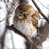 "Northern Saw-whet Owl © 2008 Chris M Neri Whitefish Point, MI NSWO  <div class=""ss-paypal-button""><div class=""ss-paypal-add-to-cart-section""><div class=""ss-paypal-product-options""><h4>Mat Sizes</h4><ul><li><a href=""https://www.paypal.com/cgi-bin/webscr?cmd=_cart&business=T77V5VKCW4K2U&lc=US&item_name=NSWO%204-10-08%20portrait.jpg&item_number=http%3A%2F%2Fwww.nightflightimages.com%2FGalleries-1%2FNew%2Fi-s2rJT64&button_subtype=products&no_note=0&cn=Add%20special%20instructions%20to%20the%20seller%3A&no_shipping=2&currency_code=USD&weight_unit=lbs&add=1&bn=PP-ShopCartBF%3Abtn_cart_SM.gif%3ANonHosted&on0=Mat%20Sizes&option_select0=5%20x%207&option_amount0=10.00&option_select1=8%20x%2010&option_amount1=18.00&option_select2=11%20x%2014&option_amount2=28.00&option_select3=card&option_amount3=4.00&option_index=0&charset=utf-8&submit=&os0=5%20x%207"" target=""paypal""><span>5 x 7 $11.00 USD</span><img src=""https://www.paypalobjects.com/en_US/i/btn/btn_cart_SM.gif""></a></li><li><a href=""https://www.paypal.com/cgi-bin/webscr?cmd=_cart&business=T77V5VKCW4K2U&lc=US&item_name=NSWO%204-10-08%20portrait.jpg&item_number=http%3A%2F%2Fwww.nightflightimages.com%2FGalleries-1%2FNew%2Fi-s2rJT64&button_subtype=products&no_note=0&cn=Add%20special%20instructions%20to%20the%20seller%3A&no_shipping=2&currency_code=USD&weight_unit=lbs&add=1&bn=PP-ShopCartBF%3Abtn_cart_SM.gif%3ANonHosted&on0=Mat%20Sizes&option_select0=5%20x%207&option_amount0=10.00&option_select1=8%20x%2010&option_amount1=18.00&option_select2=11%20x%2014&option_amount2=28.00&option_select3=card&option_amount3=4.00&option_index=0&charset=utf-8&submit=&os0=8%20x%2010"" target=""paypal""><span>8 x 10 $19.00 USD</span><img src=""https://www.paypalobjects.com/en_US/i/btn/btn_cart_SM.gif""></a></li><li><a href=""https://www.paypal.com/cgi-bin/webscr?cmd=_cart&business=T77V5VKCW4K2U&lc=US&item_name=NSWO%204-10-08%20portrait.jpg&item_number=http%3A%2F%2Fwww.nightflightimages.com%2FGalleries-1%2FNew%2Fi-s2rJT64&button_subtype=products&no_note=0&cn=Add%20special%20instructions%20to%20the%20seller%3A&no_shipping=2&currency_code=USD&weight_unit=lbs&add=1&bn=PP-ShopCartBF%3Abtn_cart_SM.gif%3ANonHosted&on0=Mat%20Sizes&option_select0=5%20x%207&option_amount0=10.00&option_select1=8%20x%2010&option_amount1=18.00&option_select2=11%20x%2014&option_amount2=28.00&option_select3=card&option_amount3=4.00&option_index=0&charset=utf-8&submit=&os0=11%20x%2014"" target=""paypal""><span>11 x 14 $29.00 USD</span><img src=""https://www.paypalobjects.com/en_US/i/btn/btn_cart_SM.gif""></a></li><li><a href=""https://www.paypal.com/cgi-bin/webscr?cmd=_cart&business=T77V5VKCW4K2U&lc=US&item_name=NSWO%204-10-08%20portrait.jpg&item_number=http%3A%2F%2Fwww.nightflightimages.com%2FGalleries-1%2FNew%2Fi-s2rJT64&button_subtype=products&no_note=0&cn=Add%20special%20instructions%20to%20the%20seller%3A&no_shipping=2&currency_code=USD&weight_unit=lbs&add=1&bn=PP-ShopCartBF%3Abtn_cart_SM.gif%3ANonHosted&on0=Mat%20Sizes&option_select0=5%20x%207&option_amount0=10.00&option_select1=8%20x%2010&option_amount1=18.00&option_select2=11%20x%2014&option_amount2=28.00&option_select3=card&option_amount3=4.00&option_index=0&charset=utf-8&submit=&os0=card"" target=""paypal""><span>card $5.00 USD</span><img src=""https://www.paypalobjects.com/en_US/i/btn/btn_cart_SM.gif""></a></li></ul></div></div> <div class=""ss-paypal-view-cart-section""><a href=""https://www.paypal.com/cgi-bin/webscr?cmd=_cart&business=T77V5VKCW4K2U&display=1&item_name=NSWO%204-10-08%20portrait.jpg&item_number=http%3A%2F%2Fwww.nightflightimages.com%2FGalleries-1%2FNew%2Fi-s2rJT64&charset=utf-8&submit="" target=""paypal"" class=""ss-paypal-submit-button""><img src=""https://www.paypalobjects.com/en_US/i/btn/btn_viewcart_LG.gif""></a></div></div><div class=""ss-paypal-button-end""></div>"