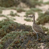 "Whimbrel © 2009 C. M. Neri.  Whitefish Point, MI WHIMWP  <div class=""ss-paypal-button""><div class=""ss-paypal-add-to-cart-section""><div class=""ss-paypal-product-options""><h4>Mat Sizes</h4><ul><li><a href=""https://www.paypal.com/cgi-bin/webscr?cmd=_cart&business=T77V5VKCW4K2U&lc=US&item_name=Whimbrel%20%C2%A9%202009%20C.%20M.%20Neri.%20%20Whitefish%20Point%2C%20MI%20WHIMWP&item_number=http%3A%2F%2Fwww.nightflightimages.com%2FGalleries-1%2FShore%2Fi-BLsjQFH&button_subtype=products&no_note=0&cn=Add%20special%20instructions%20to%20the%20seller%3A&no_shipping=2&currency_code=USD&weight_unit=lbs&add=1&bn=PP-ShopCartBF%3Abtn_cart_SM.gif%3ANonHosted&on0=Mat%20Sizes&option_select0=5%20x%207&option_amount0=10.00&option_select1=8%20x%2010&option_amount1=18.00&option_select2=11%20x%2014&option_amount2=28.00&option_select3=card&option_amount3=4.00&option_index=0&charset=utf-8&submit=&os0=5%20x%207"" target=""paypal""><span>5 x 7 $11.00 USD</span><img src=""https://www.paypalobjects.com/en_US/i/btn/btn_cart_SM.gif""></a></li><li><a href=""https://www.paypal.com/cgi-bin/webscr?cmd=_cart&business=T77V5VKCW4K2U&lc=US&item_name=Whimbrel%20%C2%A9%202009%20C.%20M.%20Neri.%20%20Whitefish%20Point%2C%20MI%20WHIMWP&item_number=http%3A%2F%2Fwww.nightflightimages.com%2FGalleries-1%2FShore%2Fi-BLsjQFH&button_subtype=products&no_note=0&cn=Add%20special%20instructions%20to%20the%20seller%3A&no_shipping=2&currency_code=USD&weight_unit=lbs&add=1&bn=PP-ShopCartBF%3Abtn_cart_SM.gif%3ANonHosted&on0=Mat%20Sizes&option_select0=5%20x%207&option_amount0=10.00&option_select1=8%20x%2010&option_amount1=18.00&option_select2=11%20x%2014&option_amount2=28.00&option_select3=card&option_amount3=4.00&option_index=0&charset=utf-8&submit=&os0=8%20x%2010"" target=""paypal""><span>8 x 10 $19.00 USD</span><img src=""https://www.paypalobjects.com/en_US/i/btn/btn_cart_SM.gif""></a></li><li><a href=""https://www.paypal.com/cgi-bin/webscr?cmd=_cart&business=T77V5VKCW4K2U&lc=US&item_name=Whimbrel%20%C2%A9%202009%20C.%20M.%20Neri.%20%20Whitefish%20Point%2C%20MI%20WHIMWP&item_number=http%3A%2F%2Fwww.nightflightimages.com%2FGalleries-1%2FShore%2Fi-BLsjQFH&button_subtype=products&no_note=0&cn=Add%20special%20instructions%20to%20the%20seller%3A&no_shipping=2&currency_code=USD&weight_unit=lbs&add=1&bn=PP-ShopCartBF%3Abtn_cart_SM.gif%3ANonHosted&on0=Mat%20Sizes&option_select0=5%20x%207&option_amount0=10.00&option_select1=8%20x%2010&option_amount1=18.00&option_select2=11%20x%2014&option_amount2=28.00&option_select3=card&option_amount3=4.00&option_index=0&charset=utf-8&submit=&os0=11%20x%2014"" target=""paypal""><span>11 x 14 $29.00 USD</span><img src=""https://www.paypalobjects.com/en_US/i/btn/btn_cart_SM.gif""></a></li><li><a href=""https://www.paypal.com/cgi-bin/webscr?cmd=_cart&business=T77V5VKCW4K2U&lc=US&item_name=Whimbrel%20%C2%A9%202009%20C.%20M.%20Neri.%20%20Whitefish%20Point%2C%20MI%20WHIMWP&item_number=http%3A%2F%2Fwww.nightflightimages.com%2FGalleries-1%2FShore%2Fi-BLsjQFH&button_subtype=products&no_note=0&cn=Add%20special%20instructions%20to%20the%20seller%3A&no_shipping=2&currency_code=USD&weight_unit=lbs&add=1&bn=PP-ShopCartBF%3Abtn_cart_SM.gif%3ANonHosted&on0=Mat%20Sizes&option_select0=5%20x%207&option_amount0=10.00&option_select1=8%20x%2010&option_amount1=18.00&option_select2=11%20x%2014&option_amount2=28.00&option_select3=card&option_amount3=4.00&option_index=0&charset=utf-8&submit=&os0=card"" target=""paypal""><span>card $5.00 USD</span><img src=""https://www.paypalobjects.com/en_US/i/btn/btn_cart_SM.gif""></a></li></ul></div></div> <div class=""ss-paypal-view-cart-section""><a href=""https://www.paypal.com/cgi-bin/webscr?cmd=_cart&business=T77V5VKCW4K2U&display=1&item_name=Whimbrel%20%C2%A9%202009%20C.%20M.%20Neri.%20%20Whitefish%20Point%2C%20MI%20WHIMWP&item_number=http%3A%2F%2Fwww.nightflightimages.com%2FGalleries-1%2FShore%2Fi-BLsjQFH&charset=utf-8&submit="" target=""paypal"" class=""ss-paypal-submit-button""><img src=""https://www.paypalobjects.com/en_US/i/btn/btn_viewcart_LG.gif""></a></div></div><div class=""ss-paypal-button-end""></div>"