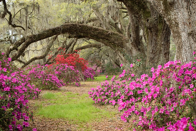 2016 Magnolia Plantation, Charleston, South Carolina