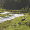 "Elk & River © 2009 Nova Mackentley Rocky Mtn NP, CO EWR  <div class=""ss-paypal-button""><div class=""ss-paypal-add-to-cart-section""><div class=""ss-paypal-product-options""><h4>Mat Sizes</h4><ul><li><a href=""https://www.paypal.com/cgi-bin/webscr?cmd=_cart&business=T77V5VKCW4K2U&lc=US&item_name=Elk%20%26amp%3B%20River%20%C2%A9%202009%20Nova%20Mackentley%20Rocky%20Mtn%20NP%2C%20CO%20EWR&item_number=http%3A%2F%2Fwww.nightflightimages.com%2FGalleries-1%2FTravels%2Fi-2K42T7F&button_subtype=products&no_note=0&cn=Add%20special%20instructions%20to%20the%20seller%3A&no_shipping=2&currency_code=USD&weight_unit=lbs&add=1&bn=PP-ShopCartBF%3Abtn_cart_SM.gif%3ANonHosted&on0=Mat%20Sizes&option_select0=5%20x%207&option_amount0=10.00&option_select1=8%20x%2010&option_amount1=18.00&option_select2=11%20x%2014&option_amount2=28.00&option_select3=card&option_amount3=4.00&option_index=0&charset=utf-8&submit=&os0=5%20x%207"" target=""paypal""><span>5 x 7 $11.00 USD</span><img src=""https://www.paypalobjects.com/en_US/i/btn/btn_cart_SM.gif""></a></li><li><a href=""https://www.paypal.com/cgi-bin/webscr?cmd=_cart&business=T77V5VKCW4K2U&lc=US&item_name=Elk%20%26amp%3B%20River%20%C2%A9%202009%20Nova%20Mackentley%20Rocky%20Mtn%20NP%2C%20CO%20EWR&item_number=http%3A%2F%2Fwww.nightflightimages.com%2FGalleries-1%2FTravels%2Fi-2K42T7F&button_subtype=products&no_note=0&cn=Add%20special%20instructions%20to%20the%20seller%3A&no_shipping=2&currency_code=USD&weight_unit=lbs&add=1&bn=PP-ShopCartBF%3Abtn_cart_SM.gif%3ANonHosted&on0=Mat%20Sizes&option_select0=5%20x%207&option_amount0=10.00&option_select1=8%20x%2010&option_amount1=18.00&option_select2=11%20x%2014&option_amount2=28.00&option_select3=card&option_amount3=4.00&option_index=0&charset=utf-8&submit=&os0=8%20x%2010"" target=""paypal""><span>8 x 10 $19.00 USD</span><img src=""https://www.paypalobjects.com/en_US/i/btn/btn_cart_SM.gif""></a></li><li><a href=""https://www.paypal.com/cgi-bin/webscr?cmd=_cart&business=T77V5VKCW4K2U&lc=US&item_name=Elk%20%26amp%3B%20River%20%C2%A9%202009%20Nova%20Mackentley%20Rocky%20Mtn%20NP%2C%20CO%20EWR&item_number=http%3A%2F%2Fwww.nightflightimages.com%2FGalleries-1%2FTravels%2Fi-2K42T7F&button_subtype=products&no_note=0&cn=Add%20special%20instructions%20to%20the%20seller%3A&no_shipping=2&currency_code=USD&weight_unit=lbs&add=1&bn=PP-ShopCartBF%3Abtn_cart_SM.gif%3ANonHosted&on0=Mat%20Sizes&option_select0=5%20x%207&option_amount0=10.00&option_select1=8%20x%2010&option_amount1=18.00&option_select2=11%20x%2014&option_amount2=28.00&option_select3=card&option_amount3=4.00&option_index=0&charset=utf-8&submit=&os0=11%20x%2014"" target=""paypal""><span>11 x 14 $29.00 USD</span><img src=""https://www.paypalobjects.com/en_US/i/btn/btn_cart_SM.gif""></a></li><li><a href=""https://www.paypal.com/cgi-bin/webscr?cmd=_cart&business=T77V5VKCW4K2U&lc=US&item_name=Elk%20%26amp%3B%20River%20%C2%A9%202009%20Nova%20Mackentley%20Rocky%20Mtn%20NP%2C%20CO%20EWR&item_number=http%3A%2F%2Fwww.nightflightimages.com%2FGalleries-1%2FTravels%2Fi-2K42T7F&button_subtype=products&no_note=0&cn=Add%20special%20instructions%20to%20the%20seller%3A&no_shipping=2&currency_code=USD&weight_unit=lbs&add=1&bn=PP-ShopCartBF%3Abtn_cart_SM.gif%3ANonHosted&on0=Mat%20Sizes&option_select0=5%20x%207&option_amount0=10.00&option_select1=8%20x%2010&option_amount1=18.00&option_select2=11%20x%2014&option_amount2=28.00&option_select3=card&option_amount3=4.00&option_index=0&charset=utf-8&submit=&os0=card"" target=""paypal""><span>card $5.00 USD</span><img src=""https://www.paypalobjects.com/en_US/i/btn/btn_cart_SM.gif""></a></li></ul></div></div> <div class=""ss-paypal-view-cart-section""><a href=""https://www.paypal.com/cgi-bin/webscr?cmd=_cart&business=T77V5VKCW4K2U&display=1&item_name=Elk%20%26amp%3B%20River%20%C2%A9%202009%20Nova%20Mackentley%20Rocky%20Mtn%20NP%2C%20CO%20EWR&item_number=http%3A%2F%2Fwww.nightflightimages.com%2FGalleries-1%2FTravels%2Fi-2K42T7F&charset=utf-8&submit="" target=""paypal"" class=""ss-paypal-submit-button""><img src=""https://www.paypalobjects.com/en_US/i/btn/btn_viewcart_LG.gif""></a></div></div><div class=""ss-paypal-button-end""></div>"