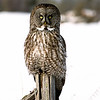 "Great Gray Owl  © 2005 C. M. Neri Aitkin County, MN GGOWPOST  <div class=""ss-paypal-button""><div class=""ss-paypal-add-to-cart-section""><div class=""ss-paypal-product-options""><h4>Mat Sizes</h4><ul><li><a href=""https://www.paypal.com/cgi-bin/webscr?cmd=_cart&business=T77V5VKCW4K2U&lc=US&item_name=Great%20Gray%20Owl%20%20%C2%A9%202005%20C.%20M.%20Neri%20Aitkin%20County%2C%20MN%20GGOWPOST&item_number=http%3A%2F%2Fwww.nightflightimages.com%2FGalleries-1%2FTravels%2Fi-pj5zhdH&button_subtype=products&no_note=0&cn=Add%20special%20instructions%20to%20the%20seller%3A&no_shipping=2&currency_code=USD&weight_unit=lbs&add=1&bn=PP-ShopCartBF%3Abtn_cart_SM.gif%3ANonHosted&on0=Mat%20Sizes&option_select0=5%20x%207&option_amount0=10.00&option_select1=8%20x%2010&option_amount1=18.00&option_select2=11%20x%2014&option_amount2=28.00&option_select3=card&option_amount3=4.00&option_index=0&charset=utf-8&submit=&os0=5%20x%207"" target=""paypal""><span>5 x 7 $11.00 USD</span><img src=""https://www.paypalobjects.com/en_US/i/btn/btn_cart_SM.gif""></a></li><li><a href=""https://www.paypal.com/cgi-bin/webscr?cmd=_cart&business=T77V5VKCW4K2U&lc=US&item_name=Great%20Gray%20Owl%20%20%C2%A9%202005%20C.%20M.%20Neri%20Aitkin%20County%2C%20MN%20GGOWPOST&item_number=http%3A%2F%2Fwww.nightflightimages.com%2FGalleries-1%2FTravels%2Fi-pj5zhdH&button_subtype=products&no_note=0&cn=Add%20special%20instructions%20to%20the%20seller%3A&no_shipping=2&currency_code=USD&weight_unit=lbs&add=1&bn=PP-ShopCartBF%3Abtn_cart_SM.gif%3ANonHosted&on0=Mat%20Sizes&option_select0=5%20x%207&option_amount0=10.00&option_select1=8%20x%2010&option_amount1=18.00&option_select2=11%20x%2014&option_amount2=28.00&option_select3=card&option_amount3=4.00&option_index=0&charset=utf-8&submit=&os0=8%20x%2010"" target=""paypal""><span>8 x 10 $19.00 USD</span><img src=""https://www.paypalobjects.com/en_US/i/btn/btn_cart_SM.gif""></a></li><li><a href=""https://www.paypal.com/cgi-bin/webscr?cmd=_cart&business=T77V5VKCW4K2U&lc=US&item_name=Great%20Gray%20Owl%20%20%C2%A9%202005%20C.%20M.%20Neri%20Aitkin%20County%2C%20MN%20GGOWPOST&item_number=http%3A%2F%2Fwww.nightflightimages.com%2FGalleries-1%2FTravels%2Fi-pj5zhdH&button_subtype=products&no_note=0&cn=Add%20special%20instructions%20to%20the%20seller%3A&no_shipping=2&currency_code=USD&weight_unit=lbs&add=1&bn=PP-ShopCartBF%3Abtn_cart_SM.gif%3ANonHosted&on0=Mat%20Sizes&option_select0=5%20x%207&option_amount0=10.00&option_select1=8%20x%2010&option_amount1=18.00&option_select2=11%20x%2014&option_amount2=28.00&option_select3=card&option_amount3=4.00&option_index=0&charset=utf-8&submit=&os0=11%20x%2014"" target=""paypal""><span>11 x 14 $29.00 USD</span><img src=""https://www.paypalobjects.com/en_US/i/btn/btn_cart_SM.gif""></a></li><li><a href=""https://www.paypal.com/cgi-bin/webscr?cmd=_cart&business=T77V5VKCW4K2U&lc=US&item_name=Great%20Gray%20Owl%20%20%C2%A9%202005%20C.%20M.%20Neri%20Aitkin%20County%2C%20MN%20GGOWPOST&item_number=http%3A%2F%2Fwww.nightflightimages.com%2FGalleries-1%2FTravels%2Fi-pj5zhdH&button_subtype=products&no_note=0&cn=Add%20special%20instructions%20to%20the%20seller%3A&no_shipping=2&currency_code=USD&weight_unit=lbs&add=1&bn=PP-ShopCartBF%3Abtn_cart_SM.gif%3ANonHosted&on0=Mat%20Sizes&option_select0=5%20x%207&option_amount0=10.00&option_select1=8%20x%2010&option_amount1=18.00&option_select2=11%20x%2014&option_amount2=28.00&option_select3=card&option_amount3=4.00&option_index=0&charset=utf-8&submit=&os0=card"" target=""paypal""><span>card $5.00 USD</span><img src=""https://www.paypalobjects.com/en_US/i/btn/btn_cart_SM.gif""></a></li></ul></div></div> <div class=""ss-paypal-view-cart-section""><a href=""https://www.paypal.com/cgi-bin/webscr?cmd=_cart&business=T77V5VKCW4K2U&display=1&item_name=Great%20Gray%20Owl%20%20%C2%A9%202005%20C.%20M.%20Neri%20Aitkin%20County%2C%20MN%20GGOWPOST&item_number=http%3A%2F%2Fwww.nightflightimages.com%2FGalleries-1%2FTravels%2Fi-pj5zhdH&charset=utf-8&submit="" target=""paypal"" class=""ss-paypal-submit-button""><img src=""https://www.paypalobjects.com/en_US/i/btn/btn_viewcart_LG.gif""></a></div></div><div class=""ss-paypal-button-end""></div>"