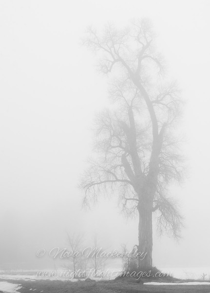 "Foggy Tree © 2010 Nova Mackentley Somewhere in WI TIF  <div class=""ss-paypal-button""><div class=""ss-paypal-add-to-cart-section""><div class=""ss-paypal-product-options""><h4>Mat Sizes</h4><ul><li><a href=""https://www.paypal.com/cgi-bin/webscr?cmd=_cart&amp;business=T77V5VKCW4K2U&amp;lc=US&amp;item_name=Foggy%20Tree%20%C2%A9%202010%20Nova%20Mackentley%20Somewhere%20in%20WI%20TIF&amp;item_number=http%3A%2F%2Fwww.nightflightimages.com%2FGalleries-1%2FTravels%2Fi-wfPmP2c&amp;button_subtype=products&amp;no_note=0&amp;cn=Add%20special%20instructions%20to%20the%20seller%3A&amp;no_shipping=2&amp;currency_code=USD&amp;weight_unit=lbs&amp;add=1&amp;bn=PP-ShopCartBF%3Abtn_cart_SM.gif%3ANonHosted&amp;on0=Mat%20Sizes&amp;option_select0=5%20x%207&amp;option_amount0=10.00&amp;option_select1=8%20x%2010&amp;option_amount1=18.00&amp;option_select2=11%20x%2014&amp;option_amount2=28.00&amp;option_select3=card&amp;option_amount3=4.00&amp;option_index=0&amp;charset=utf-8&amp;submit=&amp;os0=5%20x%207"" target=""paypal""><span>5 x 7 $11.00 USD</span><img src=""https://www.paypalobjects.com/en_US/i/btn/btn_cart_SM.gif""></a></li><li><a href=""https://www.paypal.com/cgi-bin/webscr?cmd=_cart&amp;business=T77V5VKCW4K2U&amp;lc=US&amp;item_name=Foggy%20Tree%20%C2%A9%202010%20Nova%20Mackentley%20Somewhere%20in%20WI%20TIF&amp;item_number=http%3A%2F%2Fwww.nightflightimages.com%2FGalleries-1%2FTravels%2Fi-wfPmP2c&amp;button_subtype=products&amp;no_note=0&amp;cn=Add%20special%20instructions%20to%20the%20seller%3A&amp;no_shipping=2&amp;currency_code=USD&amp;weight_unit=lbs&amp;add=1&amp;bn=PP-ShopCartBF%3Abtn_cart_SM.gif%3ANonHosted&amp;on0=Mat%20Sizes&amp;option_select0=5%20x%207&amp;option_amount0=10.00&amp;option_select1=8%20x%2010&amp;option_amount1=18.00&amp;option_select2=11%20x%2014&amp;option_amount2=28.00&amp;option_select3=card&amp;option_amount3=4.00&amp;option_index=0&amp;charset=utf-8&amp;submit=&amp;os0=8%20x%2010"" target=""paypal""><span>8 x 10 $19.00 USD</span><img src=""https://www.paypalobjects.com/en_US/i/btn/btn_cart_SM.gif""></a></li><li><a href=""https://www.paypal.com/cgi-bin/webscr?cmd=_cart&amp;business=T77V5VKCW4K2U&amp;lc=US&amp;item_name=Foggy%20Tree%20%C2%A9%202010%20Nova%20Mackentley%20Somewhere%20in%20WI%20TIF&amp;item_number=http%3A%2F%2Fwww.nightflightimages.com%2FGalleries-1%2FTravels%2Fi-wfPmP2c&amp;button_subtype=products&amp;no_note=0&amp;cn=Add%20special%20instructions%20to%20the%20seller%3A&amp;no_shipping=2&amp;currency_code=USD&amp;weight_unit=lbs&amp;add=1&amp;bn=PP-ShopCartBF%3Abtn_cart_SM.gif%3ANonHosted&amp;on0=Mat%20Sizes&amp;option_select0=5%20x%207&amp;option_amount0=10.00&amp;option_select1=8%20x%2010&amp;option_amount1=18.00&amp;option_select2=11%20x%2014&amp;option_amount2=28.00&amp;option_select3=card&amp;option_amount3=4.00&amp;option_index=0&amp;charset=utf-8&amp;submit=&amp;os0=11%20x%2014"" target=""paypal""><span>11 x 14 $29.00 USD</span><img src=""https://www.paypalobjects.com/en_US/i/btn/btn_cart_SM.gif""></a></li><li><a href=""https://www.paypal.com/cgi-bin/webscr?cmd=_cart&amp;business=T77V5VKCW4K2U&amp;lc=US&amp;item_name=Foggy%20Tree%20%C2%A9%202010%20Nova%20Mackentley%20Somewhere%20in%20WI%20TIF&amp;item_number=http%3A%2F%2Fwww.nightflightimages.com%2FGalleries-1%2FTravels%2Fi-wfPmP2c&amp;button_subtype=products&amp;no_note=0&amp;cn=Add%20special%20instructions%20to%20the%20seller%3A&amp;no_shipping=2&amp;currency_code=USD&amp;weight_unit=lbs&amp;add=1&amp;bn=PP-ShopCartBF%3Abtn_cart_SM.gif%3ANonHosted&amp;on0=Mat%20Sizes&amp;option_select0=5%20x%207&amp;option_amount0=10.00&amp;option_select1=8%20x%2010&amp;option_amount1=18.00&amp;option_select2=11%20x%2014&amp;option_amount2=28.00&amp;option_select3=card&amp;option_amount3=4.00&amp;option_index=0&amp;charset=utf-8&amp;submit=&amp;os0=card"" target=""paypal""><span>card $5.00 USD</span><img src=""https://www.paypalobjects.com/en_US/i/btn/btn_cart_SM.gif""></a></li></ul></div></div> <div class=""ss-paypal-view-cart-section""><a href=""https://www.paypal.com/cgi-bin/webscr?cmd=_cart&amp;business=T77V5VKCW4K2U&amp;display=1&amp;item_name=Foggy%20Tree%20%C2%A9%202010%20Nova%20Mackentley%20Somewhere%20in%20WI%20TIF&amp;item_number=http%3A%2F%2Fwww.nightflightimages.com%2FGalleries-1%2FTravels%2Fi-wfPmP2c&amp;charset=utf-8&amp;submit="" target=""paypal"" class=""ss-paypal-submit-button""><img src=""https://www.paypalobjects.com/en_US/i/btn/btn_viewcart_LG.gif""></a></div></div><div class=""ss-paypal-button-end""></div>"