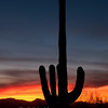 "Sunset and Saguaro © 2011 C. M. Neri Saguaro National Park, AZ SAGUARO  <div class=""ss-paypal-button""><div class=""ss-paypal-add-to-cart-section""><div class=""ss-paypal-product-options""><h4>Mat Sizes</h4><ul><li><a href=""https://www.paypal.com/cgi-bin/webscr?cmd=_cart&business=T77V5VKCW4K2U&lc=US&item_name=Sunset%20and%20Saguaro%20%C2%A9%202011%20C.%20M.%20Neri%20Saguaro%20National%20Park%2C%20AZ%20SAGUARO&item_number=http%3A%2F%2Fwww.nightflightimages.com%2FGalleries-1%2FTravels%2Fi-xmw7ZQT&button_subtype=products&no_note=0&cn=Add%20special%20instructions%20to%20the%20seller%3A&no_shipping=2&currency_code=USD&weight_unit=lbs&add=1&bn=PP-ShopCartBF%3Abtn_cart_SM.gif%3ANonHosted&on0=Mat%20Sizes&option_select0=5%20x%207&option_amount0=10.00&option_select1=8%20x%2010&option_amount1=18.00&option_select2=11%20x%2014&option_amount2=28.00&option_select3=card&option_amount3=4.00&option_index=0&charset=utf-8&submit=&os0=5%20x%207"" target=""paypal""><span>5 x 7 $11.00 USD</span><img src=""https://www.paypalobjects.com/en_US/i/btn/btn_cart_SM.gif""></a></li><li><a href=""https://www.paypal.com/cgi-bin/webscr?cmd=_cart&business=T77V5VKCW4K2U&lc=US&item_name=Sunset%20and%20Saguaro%20%C2%A9%202011%20C.%20M.%20Neri%20Saguaro%20National%20Park%2C%20AZ%20SAGUARO&item_number=http%3A%2F%2Fwww.nightflightimages.com%2FGalleries-1%2FTravels%2Fi-xmw7ZQT&button_subtype=products&no_note=0&cn=Add%20special%20instructions%20to%20the%20seller%3A&no_shipping=2&currency_code=USD&weight_unit=lbs&add=1&bn=PP-ShopCartBF%3Abtn_cart_SM.gif%3ANonHosted&on0=Mat%20Sizes&option_select0=5%20x%207&option_amount0=10.00&option_select1=8%20x%2010&option_amount1=18.00&option_select2=11%20x%2014&option_amount2=28.00&option_select3=card&option_amount3=4.00&option_index=0&charset=utf-8&submit=&os0=8%20x%2010"" target=""paypal""><span>8 x 10 $19.00 USD</span><img src=""https://www.paypalobjects.com/en_US/i/btn/btn_cart_SM.gif""></a></li><li><a href=""https://www.paypal.com/cgi-bin/webscr?cmd=_cart&business=T77V5VKCW4K2U&lc=US&item_name=Sunset%20and%20Saguaro%20%C2%A9%202011%20C.%20M.%20Neri%20Saguaro%20National%20Park%2C%20AZ%20SAGUARO&item_number=http%3A%2F%2Fwww.nightflightimages.com%2FGalleries-1%2FTravels%2Fi-xmw7ZQT&button_subtype=products&no_note=0&cn=Add%20special%20instructions%20to%20the%20seller%3A&no_shipping=2&currency_code=USD&weight_unit=lbs&add=1&bn=PP-ShopCartBF%3Abtn_cart_SM.gif%3ANonHosted&on0=Mat%20Sizes&option_select0=5%20x%207&option_amount0=10.00&option_select1=8%20x%2010&option_amount1=18.00&option_select2=11%20x%2014&option_amount2=28.00&option_select3=card&option_amount3=4.00&option_index=0&charset=utf-8&submit=&os0=11%20x%2014"" target=""paypal""><span>11 x 14 $29.00 USD</span><img src=""https://www.paypalobjects.com/en_US/i/btn/btn_cart_SM.gif""></a></li><li><a href=""https://www.paypal.com/cgi-bin/webscr?cmd=_cart&business=T77V5VKCW4K2U&lc=US&item_name=Sunset%20and%20Saguaro%20%C2%A9%202011%20C.%20M.%20Neri%20Saguaro%20National%20Park%2C%20AZ%20SAGUARO&item_number=http%3A%2F%2Fwww.nightflightimages.com%2FGalleries-1%2FTravels%2Fi-xmw7ZQT&button_subtype=products&no_note=0&cn=Add%20special%20instructions%20to%20the%20seller%3A&no_shipping=2&currency_code=USD&weight_unit=lbs&add=1&bn=PP-ShopCartBF%3Abtn_cart_SM.gif%3ANonHosted&on0=Mat%20Sizes&option_select0=5%20x%207&option_amount0=10.00&option_select1=8%20x%2010&option_amount1=18.00&option_select2=11%20x%2014&option_amount2=28.00&option_select3=card&option_amount3=4.00&option_index=0&charset=utf-8&submit=&os0=card"" target=""paypal""><span>card $5.00 USD</span><img src=""https://www.paypalobjects.com/en_US/i/btn/btn_cart_SM.gif""></a></li></ul></div></div> <div class=""ss-paypal-view-cart-section""><a href=""https://www.paypal.com/cgi-bin/webscr?cmd=_cart&business=T77V5VKCW4K2U&display=1&item_name=Sunset%20and%20Saguaro%20%C2%A9%202011%20C.%20M.%20Neri%20Saguaro%20National%20Park%2C%20AZ%20SAGUARO&item_number=http%3A%2F%2Fwww.nightflightimages.com%2FGalleries-1%2FTravels%2Fi-xmw7ZQT&charset=utf-8&submit="" target=""paypal"" class=""ss-paypal-submit-button""><img src=""https://www.paypalobjects.com/en_US/i/btn/btn_viewcart_LG.gif""></a></div></div><div class=""ss-paypal-button-end""></div>"