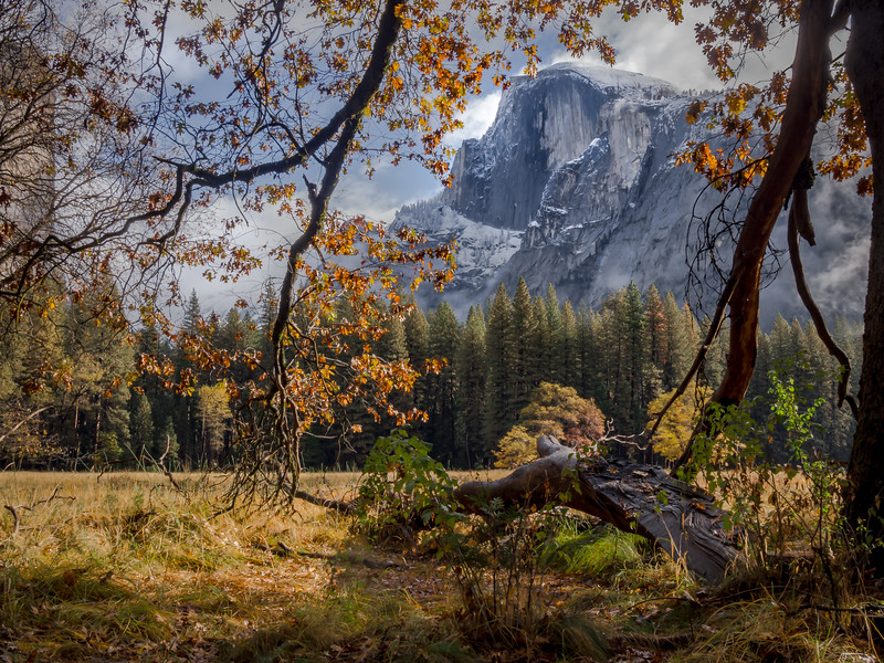 Fall Yosemite, Curry Meadow