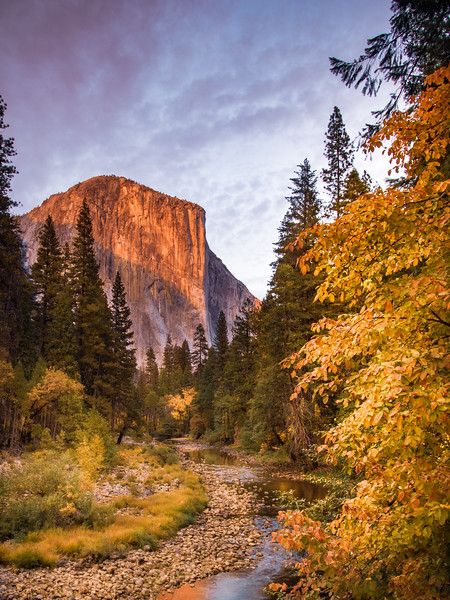 El Capitain and Dogwoods, Yosemite Fall