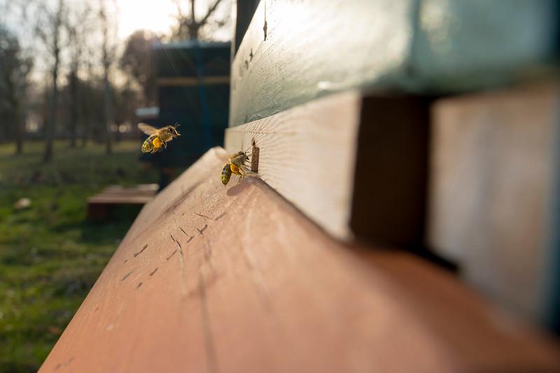 Bringing in the pollen