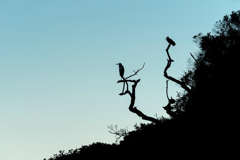 Birds view