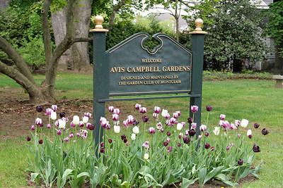 Avis Campbell Gardens
