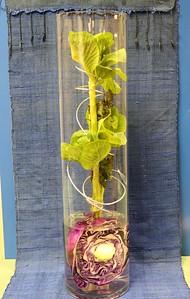 September, Advanced Plus, Mono-Botanic Design, Fran Liscio, Second Award