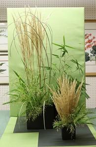 September, Advanced Plus, Mono-Botanic Design, Cynthia Corhan-Aitken, First Award