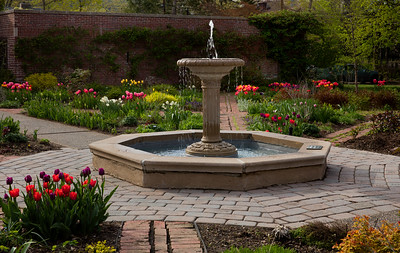 Tulips and Fountain at Avis Campbell Gardens