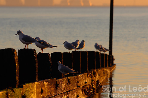 Seafront Winter Sunset