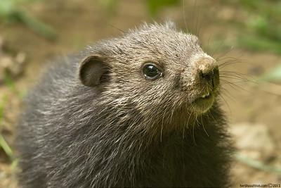 Groundhog1_060113sm