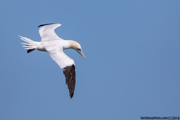 Seabirds and Pelagic
