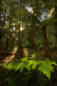 Cathedral of Ferns, Mt Wilson - Blue Mountains New South Wales.