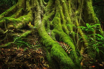 Growing Old Under a Blanket of Moss - Leura Forest, Blue Mountains NSW.
