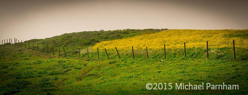 Point Reyes Prairie, CA 2015