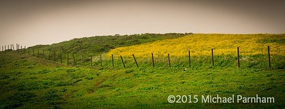 Point Reyes Prairie