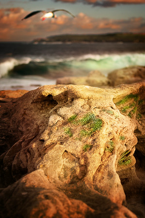 Pockets of life - Maroubra NSW.