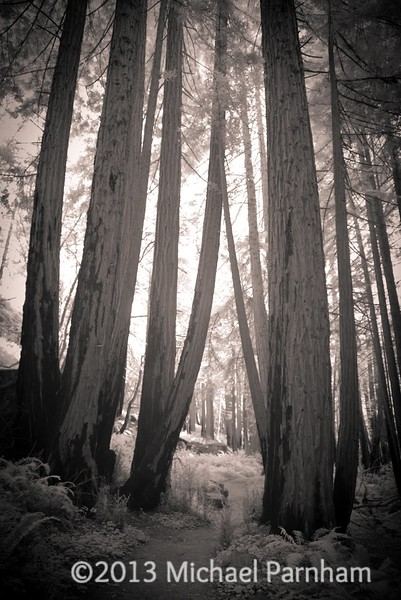 Red wood trail, Limekiln SP, CA