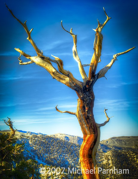 Dead Bristlecone Pine, Eastern CA