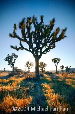 Mojave Desert, Southern California