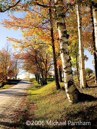 White Birch Foliage Drive