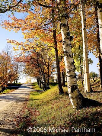 White Birch Foliage Drive