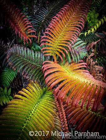 Colored Hawaiian Ferns