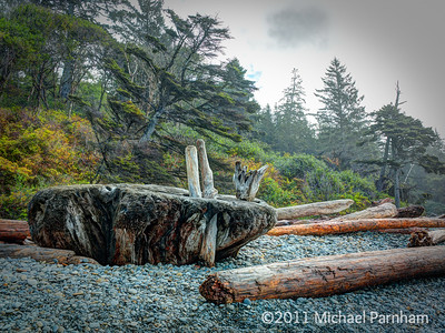 Ruby Beach Driftwood