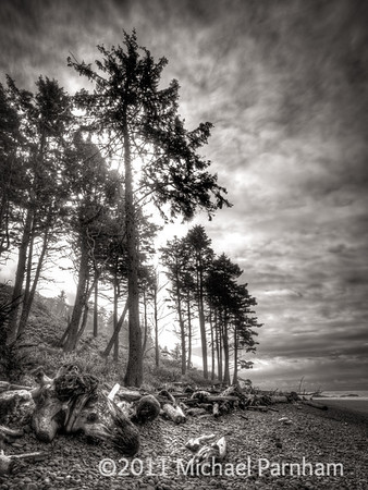 Ruby Beach Pines