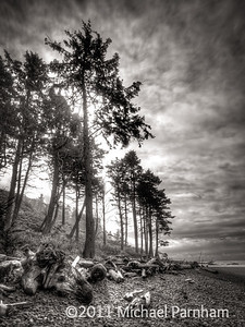 Ruby Beach Pines