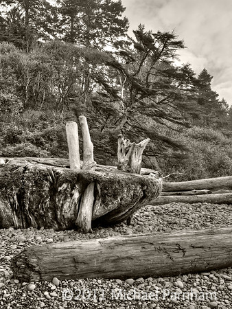 Ruby Beach Driftwood Tangle