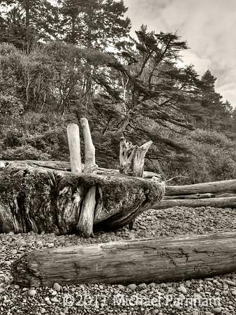 Ruby Beach Driftwood Tangle