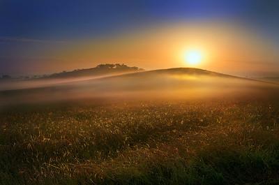 Sea of Golden Grass