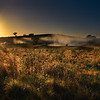 Dawn Grass