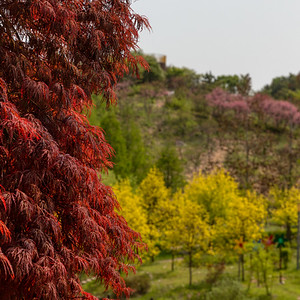 Yeonginsan in Bloom