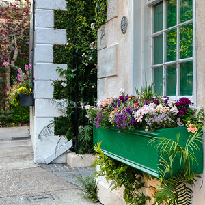 Charleston Flower Boxes