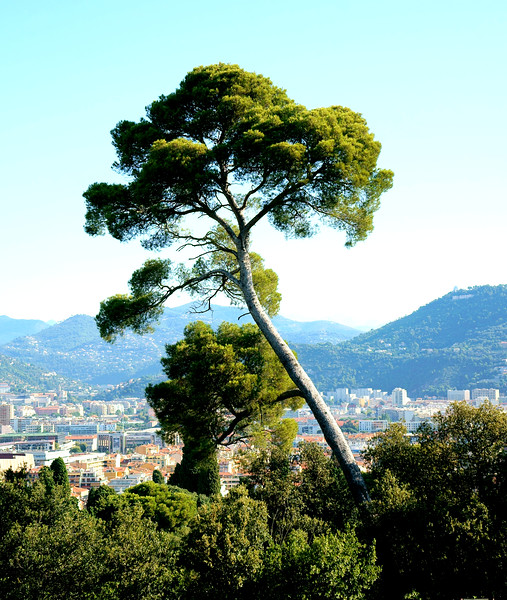 Can't leave highest place in Nice without some scenics.