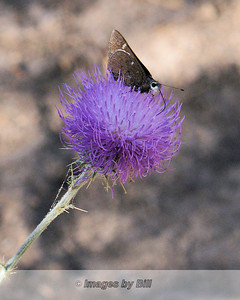 Chiricahua National Monument 2007